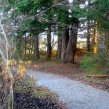 Trails at Divers Lake
