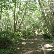 Trails through Linley Valley