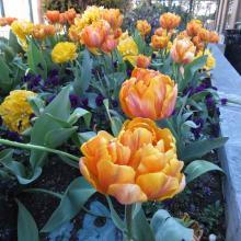 Springtime in Nanaimo